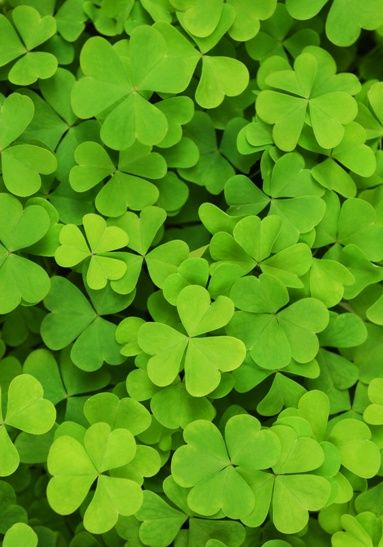 Snip-its St. Patrick's Day Family Traditions